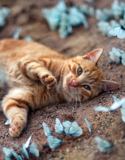 Resultado de imagem para gatos espalhados