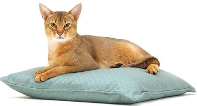 gatosdomesticados1