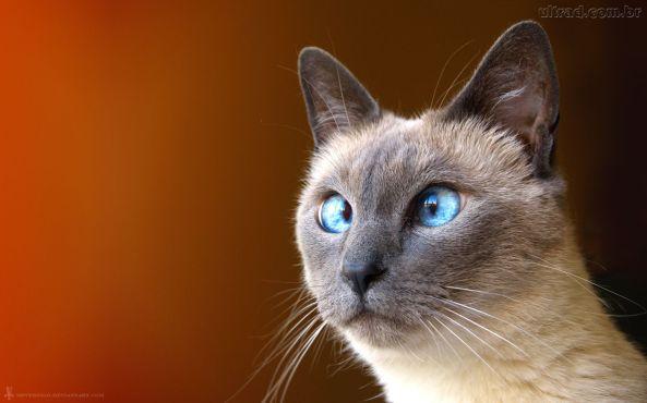 gato vesguinho