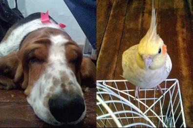 Qualquer animal pode ser submetido ao tratamento espiritual. (Foto: Divulgação)