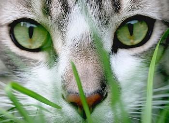 gatos e espiritos