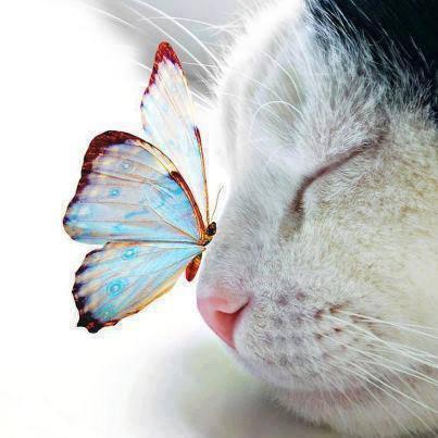 gato e borboleta.