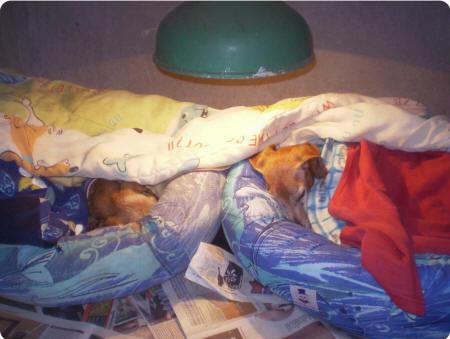 Se o cão gosta de ficar entocado colocamos casinhas, com caminhas super fofinhas para mantê-los aquecidos. Com cúpulas de aquecimento também.