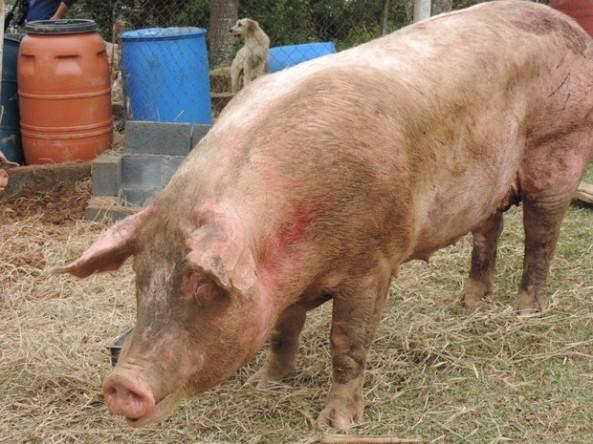 Animais ainda possuem marcas de machucados devido ao acidente (Foto: Jomar Bellini / G1)