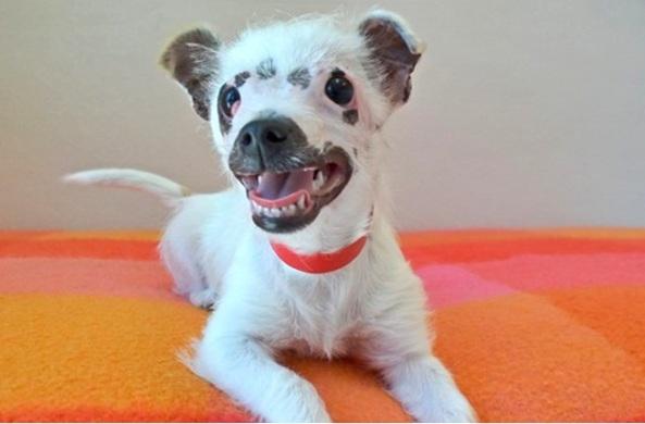A família de Christine Doblar se apaixonou por Lisa assim que a viram. Eles tinham perdido Luna, uma Chihuahua e estavam querendo outro cão. O labrador da família estava deprimido pois estava sozinho depois que Luna se foi. Agora Lisa está recebendo todo o amor e carinho que ela merece. Veja as fotos dessa família linda!