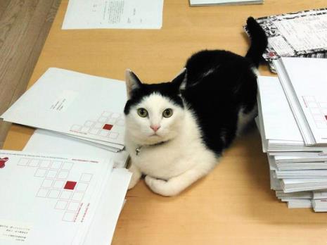 Foto: Reprodução Gato Sobre Uma mesa não Escritório da Empresa Ferray Corporation, em Tóquio