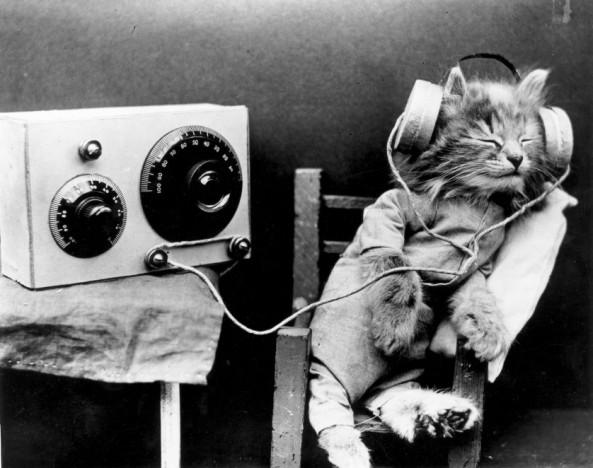 musica-para-gatos-838x662