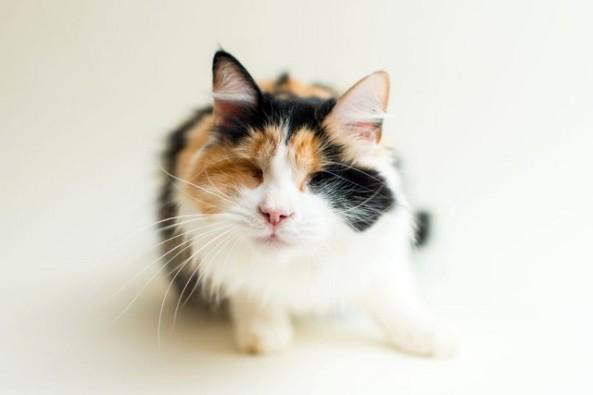 COMENTÁRIOS Casey E UMA Fotógrafa de gatos de Los Angeles e EUA SUAS fotos - Que São Incríveis - Para Ajudar OS bichanos a Serem adotados.  Uma Fotógrafa E um Profissional oficial de Vários abrigos e grupos de Resgate de animais, incluíndo o Santuário de Milo, Que É UM Abrigo parágrafo gatinhos Portadores de Necessidades Especiais.  Casey percebeu hum aumento não Número de gatos Adultos e filhotes CEGOS Nos abrigos e grupos em Que presta Serviço Voluntário.  Uma Fotógrafa, EntreTanto, recebeu ISSO Como hum Sinal e decidiu Fazer hum Ensaio especial com Estes bichinhos.  Gatinhos CEGOS Ela, ENTÃO, Entrou em Contato com a fundadora do Santuário de Milo, Onde conheceu Regis, um gatinho cego, em abril Deste ano.  Para SUA felicidade, tanto um Quanto fundadora Regis toparam a ideia do Ensaio na hora.  Cobre (Cobre) foi resgatado AINDA filhote, Andando por ai cego, com fome e com medo Muito cobre foi resgatado AINDA filhote, Andando por ai cego, com fome e com Muito medo.  AJUDANDO O SANTUÁRIO Pixie Pawspouncer foi Jogada Pssaro cega e prenhe.  Milo da salvou a ELA e SEUS filhotes.  Pixie Pawspouncer foi Jogada Pssaro cega e prenhe.  Milo da salvou a ELA e SEUS filhotes.